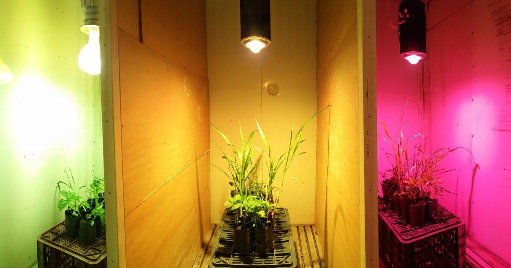 LED növényvilágítás - broadband LED teszt