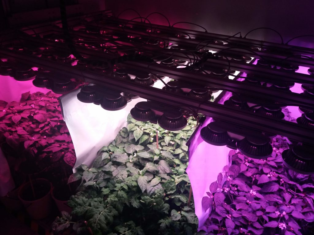 MTA ATK MArtonvásár LEDIUM LED növényvilágítás kisérlet