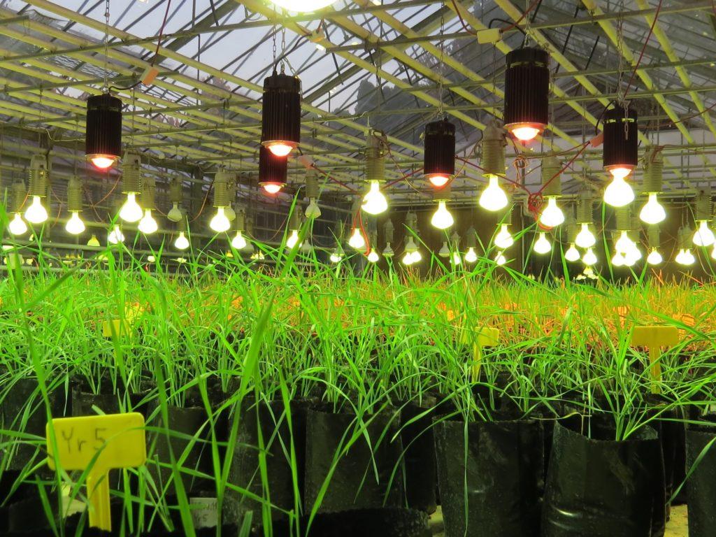 LED növényvilágítás - Gabonakutató, Szeged